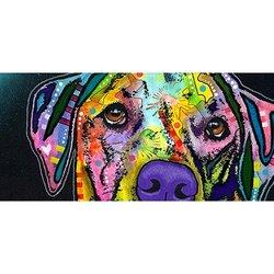 Vibrant Pet Prints