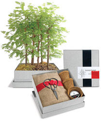 Grow Your Own Bonsai Tree Kit -..