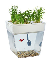 Self-Cleaning Fish Tank That Grows..