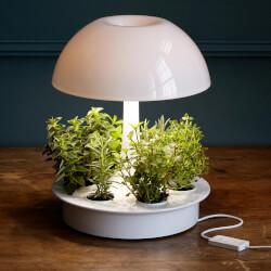 Ambienta Grow Lamp